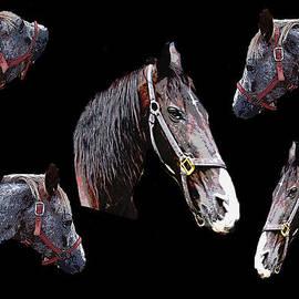 Michael Genova - Horse Sense