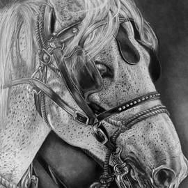 Tara Aguilar - Horse