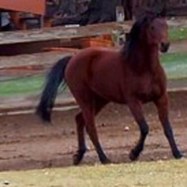 Bobbee Rickard - Horseplay 1