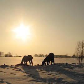 Zina Stromberg - Horses in winter