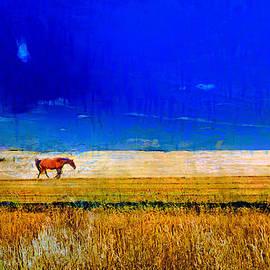 Carl Rolfe - Horsezone
