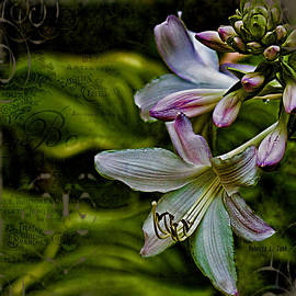 Bellesouth Studio - Hosta lilies with texture