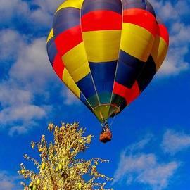 Dan Vallo - Hot Air Ballon and Yucca
