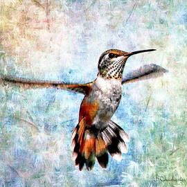 Barbara Chichester - Hovering Rufous Hummingbird