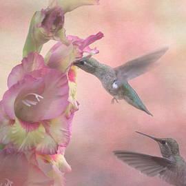 Angie Vogel - Humming Gladiola