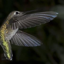 Dennis Reagan - Hummingbird