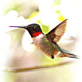 Travis Truelove - Hummingbird - 1st for 2013