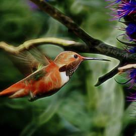 Ernie Echols - Hummingbird Dreams Digital Art