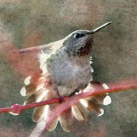 Angie Vogel - Hummingbird Fan