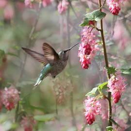 Angie Vogel - Hummingbird Heaven