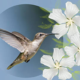 Bonnie Barry - Hummingbird Heaven