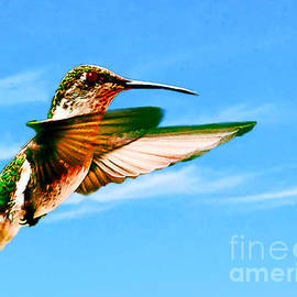 Bob and Nadine Johnston - Hummingbird Lodi California
