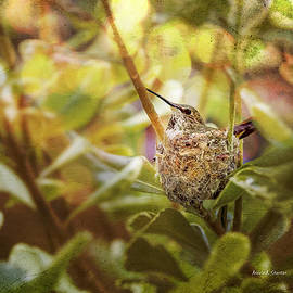 Angela A Stanton - Hummingbird Mom in Nest