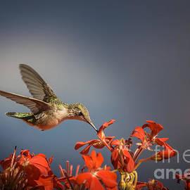 Jola Martysz - Hummingbird or My Summer Visitor