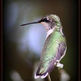 Travis Truelove - Hummingbird Photo - Side View
