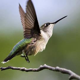 Christina Rollo - Hummingbird Reach