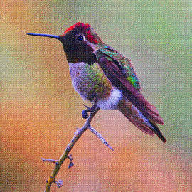 Tom Janca - Hummingbird