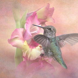 Angie Vogel - Hummingbirds Gladiola