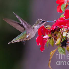 Photos By  Cassandra - Hummy Feeding on Flower