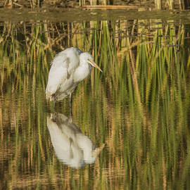 Jean Noren - Hunched up White Heron
