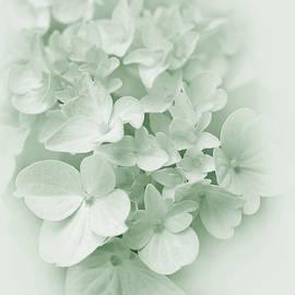 Jennie Marie Schell - Hydrangea Flowers Green Pastel Delight