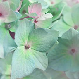 Jennie Marie Schell - Hydrangea Flowers in Greens