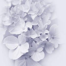 Jennie Marie Schell - Hydrangea Flowers Lavender Delight