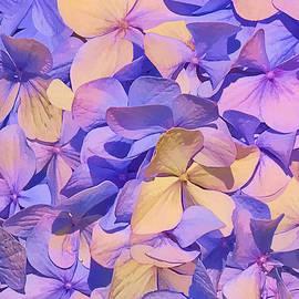 Marcia Colelli - Summer Visions