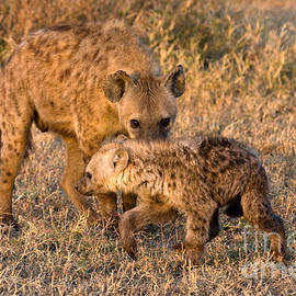 Chris Scroggins - Hyena Mother and Cub