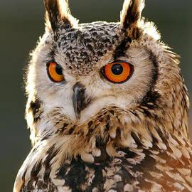 Roeselien Raimond - HypnotEyes  Eurasian Eagle Owl