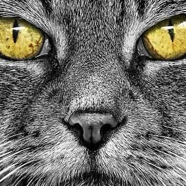 Adrian Campfield - Hypnotizing Eyes