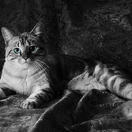 Kathleen Horner - I am Cat