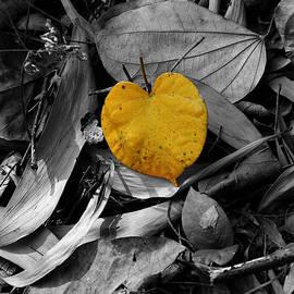 Janet Pancho Gupta - I Found LOVE