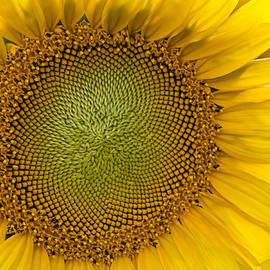 Susan Candelario - I Got Sunshine