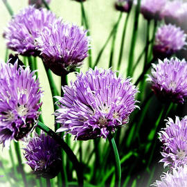 Music of the Heart - I Love Chives