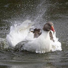 Venetia Featherstone-Witty - I Love My Bath