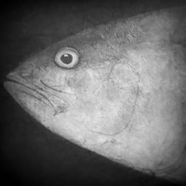 Patricia Januszkiewicz - I See You - Fish