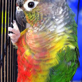 Selma Glunn - I want Polly
