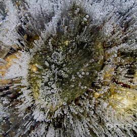 Fred  Sheridan - Ice bubbles