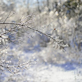 Joshua McCullough - Ice Pixies