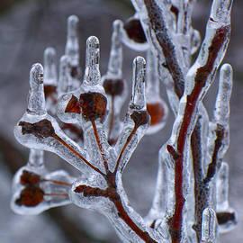 Thomas Woolworth - Ice Storm 02