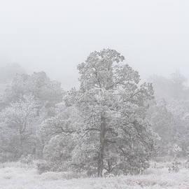Renny Spencer - Ice Storm