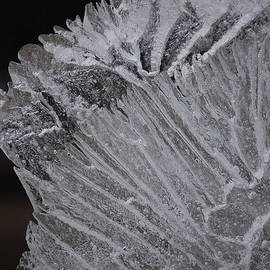 First Star Art  - Ice Veins by jammer