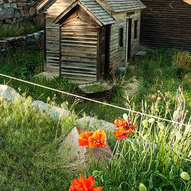 Robert Ford - Iceland Poppy and Derelict Buildings Silver Plume Historic Mining Town near Georgetown Colorado