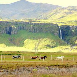 Hilde Widerberg - Icelandic view