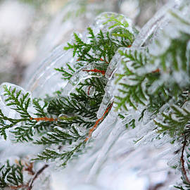 Jenny Rainbow - Icicles on the Juniper Green Branches