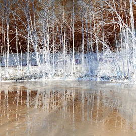 The Creative Minds Art and Photography - Icy Reflections