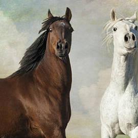 Karen Slagle - If Horses Took Selfies