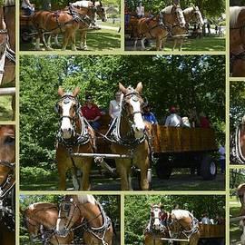Kathy Barney - If You Love Belgian Horses
