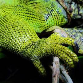 Werner Lehmann - Iguana Details